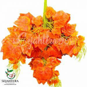 Daun Anggur Orange