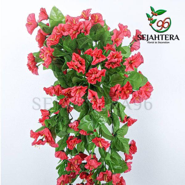 Juntai morning glory Merah