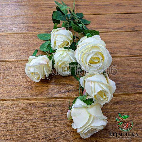 Rose Blues Cream