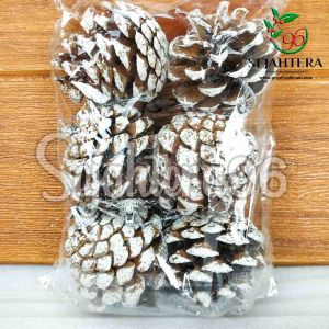 Pinus-3-4-cm-S6-Putih